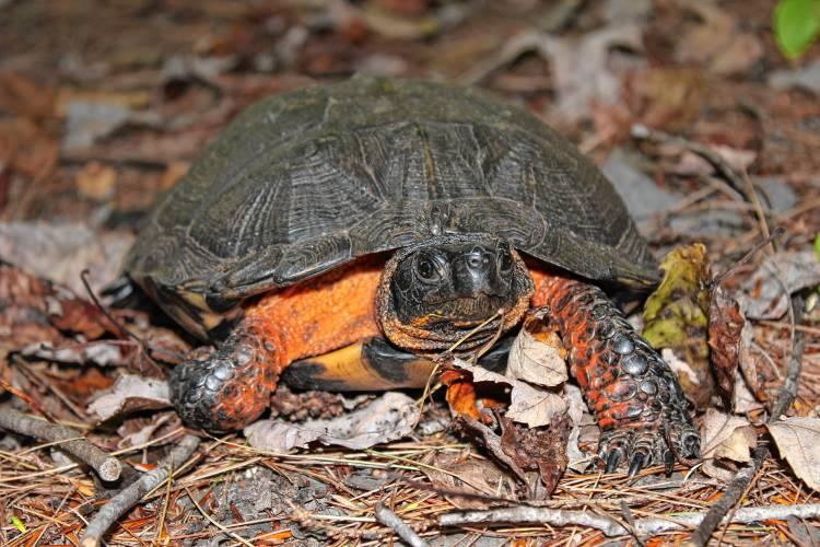 N H Reptiles Valley News - Voluntee...