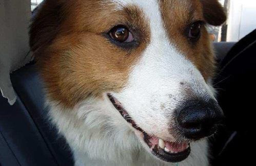 Claremont man cited in case of abandoned dog in Windsor