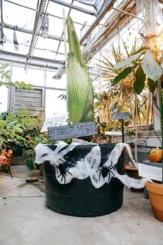 Valley News - 'Corpse Flower' That Smells Like Dirty Diapers