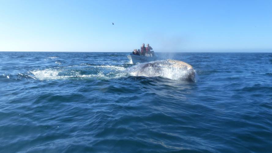 Valley News On the Whale Watch Off Mexico – Seattle Times Birth Announcements
