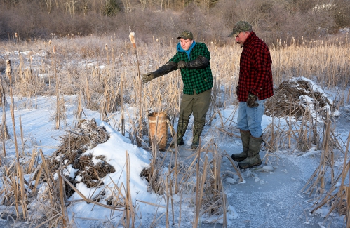 Valley News Carrying On A Vermont Trapping Tradition