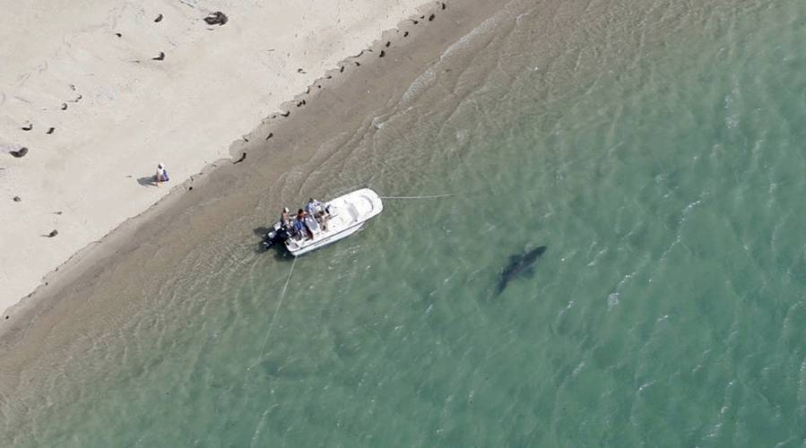 Valley News - Shark Worries on Cape Cod