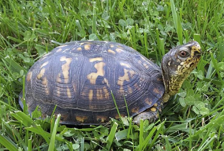 Valley News - Do Your Homework Before Getting a Turtle