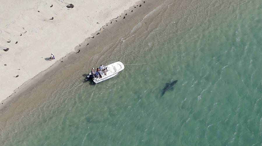 Valley News - Some say response to fatal shark attacks on