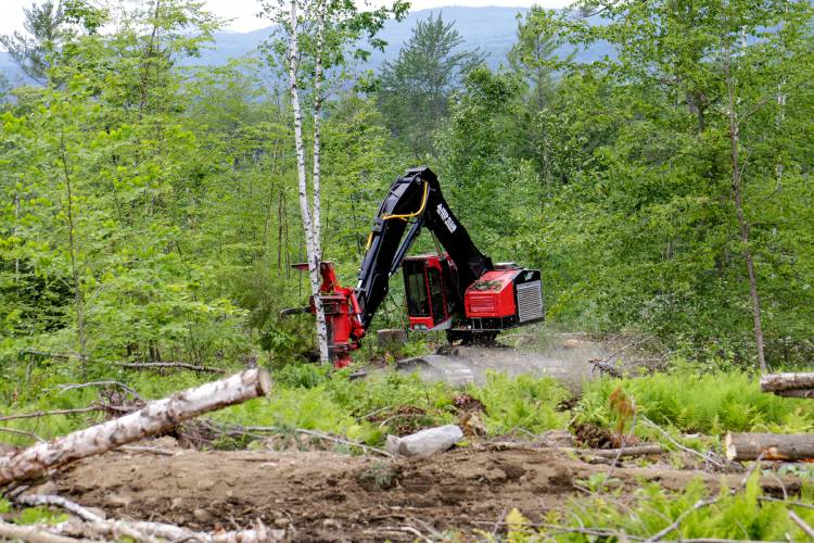 Stacey Thomson Operates A Feller Buncher At One Of His Timber Sites Spanning 200 Acres In Bath N H On Wednesday June 27 2018